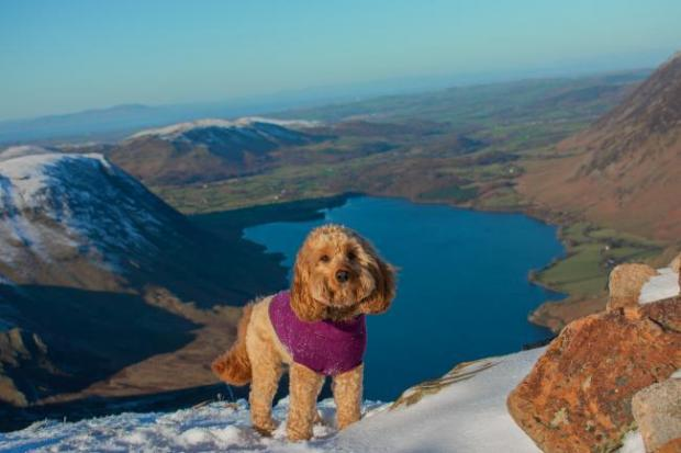 Get free holidays with your dog by becoming a Canine Critic