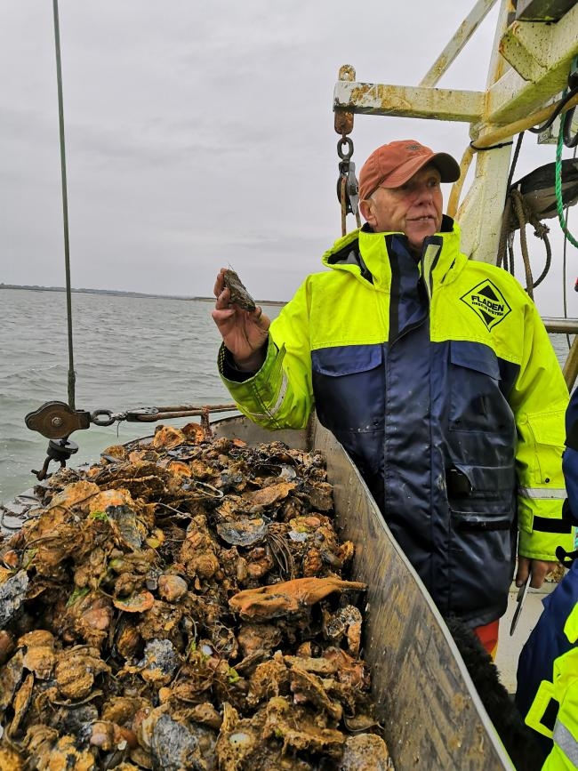 Alan Bird, oyster grower explains how he identifies the native oysters from the cultch and other species living on the estuary floor