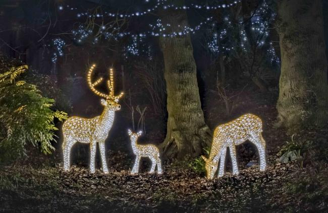 Christmas lights at Colchester Zoo. Picture Colchester Zoo