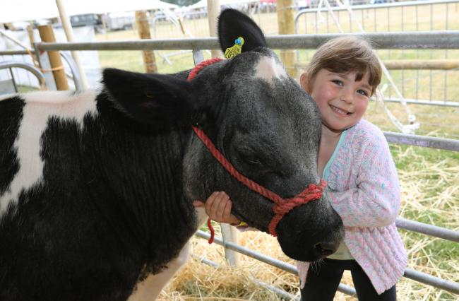 The Tendring Show, held in Manningtree. Evie Lanham with her calf Rosie