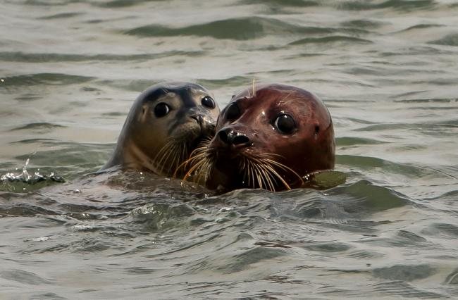Seal Population Is Booming And So Is Boat Trip Business