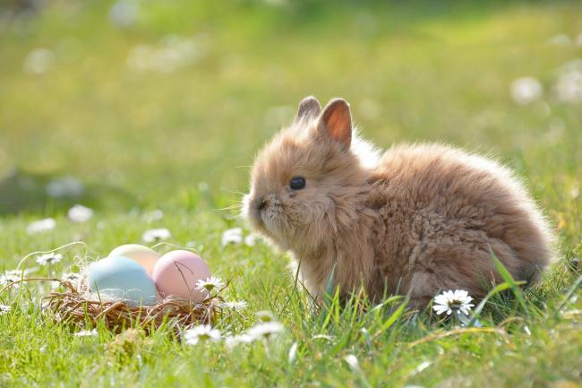 EASTER: The Met Office have released the forecast for the four-day Easter weekend. Picture: Pixabay