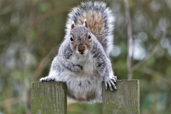 Cracking - Cheryl Holland took this photo of one of the squirrels in Castle Park, Colchester