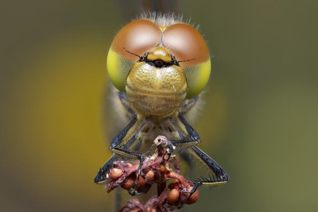 Stunning - Andrew Neal's winning shot of a dragonfly at Hythe Lagoons