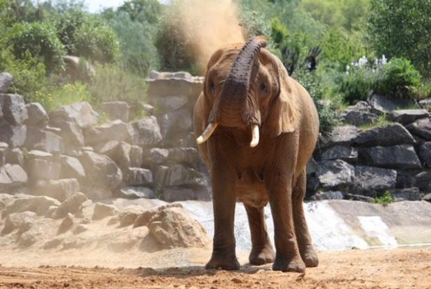 Gazette: Animals - an elephant at Colchester Zoo