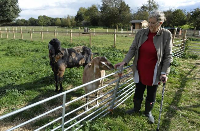 Dedam Community Farm..Gill De'Ath at the therapy farm with goats Minky and Casper.