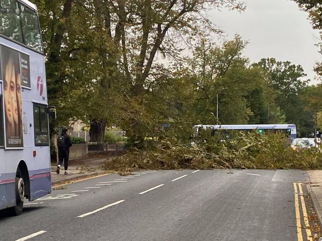 Blocked - the felled tree in Lexden Road. Picture: Seana Hughes