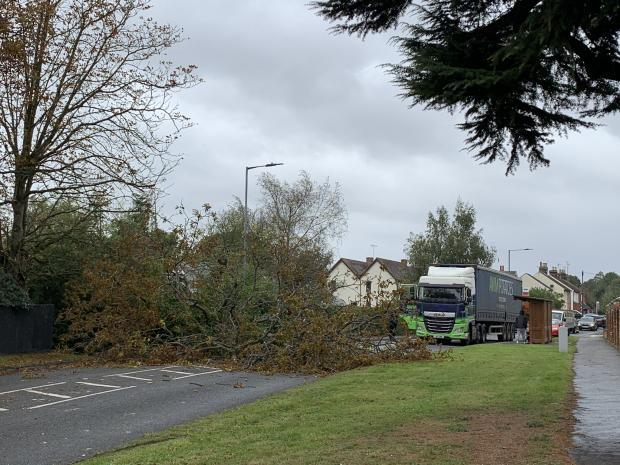 Gazette: High winds - the fallen tree Pictures: Ian Wyatt
