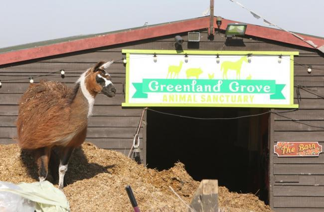 STAYING CLOSED: The Greenland Grove Animal Sanctuary will no reopen on April 12
