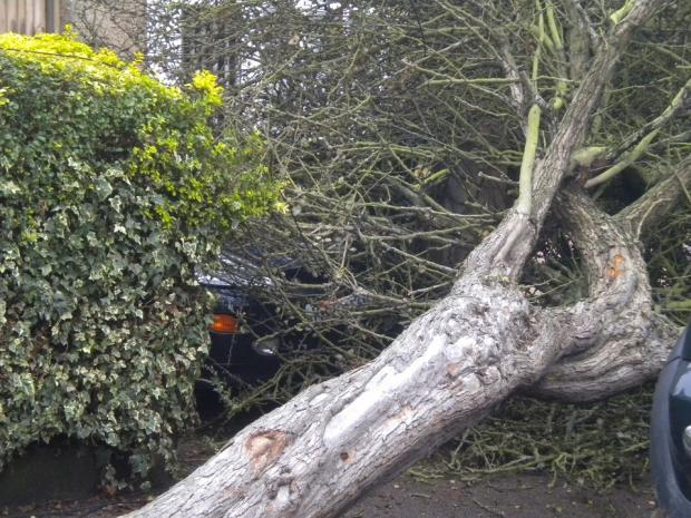 The fallen tree in St Helena Road, Colchester, blocks in a resident and her car.