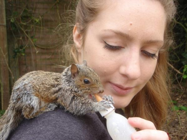 Baby squirrel who was found nesting in sheep's fleece is released into wild