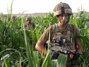 Lance Corporal John Dippnall crossing a cornfield in the green zone.