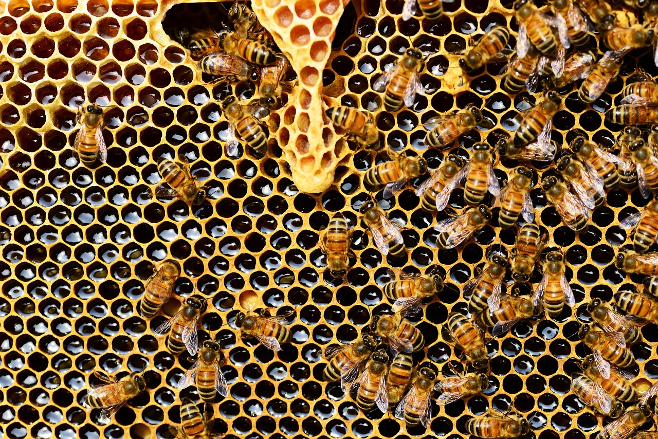 Thieves steal 16 colonies of bees