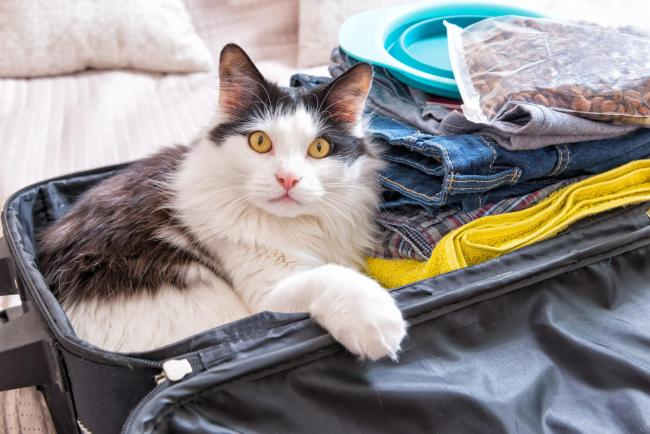 Pet passengers - extra checks may be needed when taking pets abroad in case of a no deal