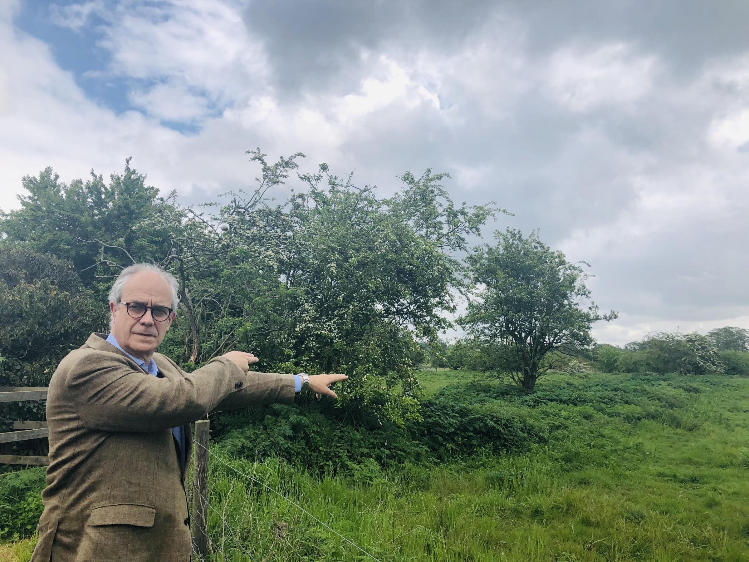 Row - Dedham Vale Society chairman Charles Clover shows where the hedge was cut